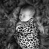 1 Cali Newborn session (8)