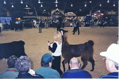 Lillian showing Miss Tea after we had purchased her
