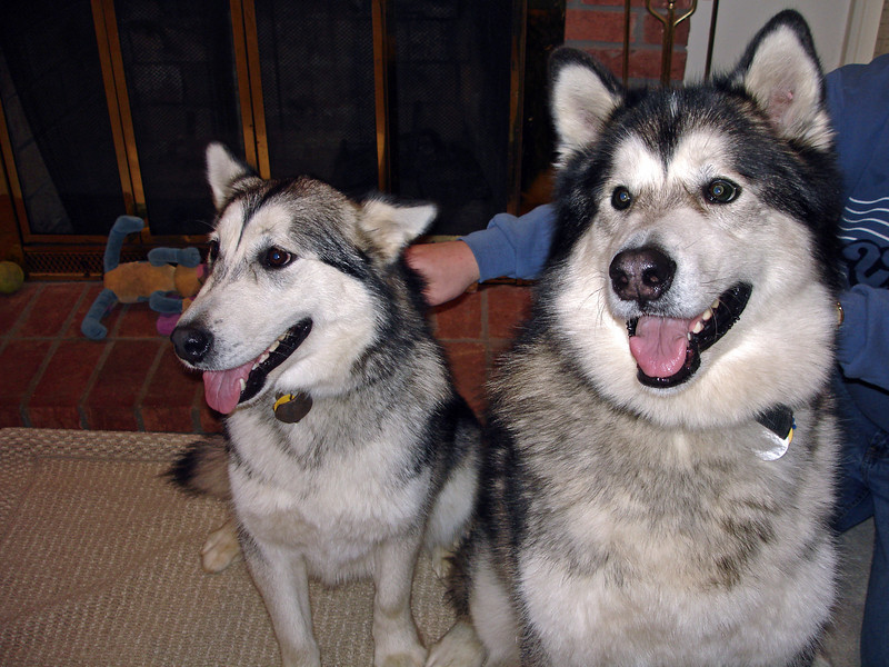 Brother's Dogs - 2005