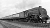 60028 Walter K  Whigham near Huntingdon 20th September 1956