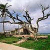 Cuba Tree at the beach Feb 2008 slides 091