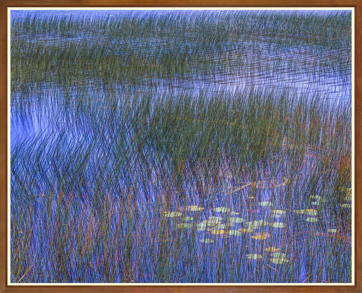 Reeds, Blue Water and Water Lilies