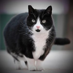C'est chat la vie ?