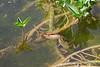 Le baiser de la grenouille au poisson...