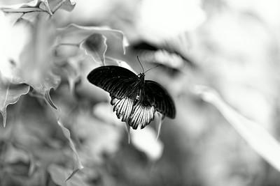 _MG_9539 -DxO-300dpi-©Ch  Mouton