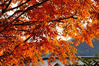 automne, paysage d'automne, fall, automn