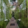 Longwood Gardens - Acacia Passage
