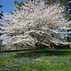 Longwood Gardens - Oak and Conifer Knoll