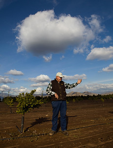 Orange Cove,CA---Citrus farmer Harvey Bailey stands in an orange grove just outside the city of Orange Cove on Monday, Dec. 14, 2009 which is set up with drip irrigation. Bailey is a citrus farmer and depends on water supplies for his fields. Bailey remembers the drought of 1976-77 which devastated the local economy.  Citrus fruit are the life-blood cities like Orange Cove and Lemon Cove. The new proposed reservoir at Temperance Flat would help water supplies to Orange Cove and other Ag towns but the question remains; who will pay for the new reservoir? Photo by Tomas Ovalle