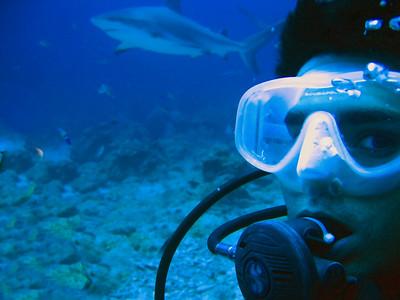 LU with Shark (5)