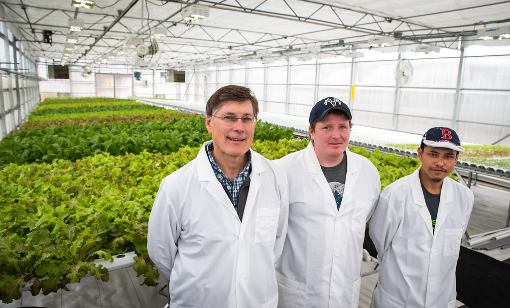 . Bill Evans (L), hydroponic farmer and owner of Fresh Roots Greenhouse of Chelmsford, stands before his crop with his hydroponic technicians, Tom Farrell, (c) and Soeuth Path, both of Lowell.   Photo:  Scot Langdon / SUN