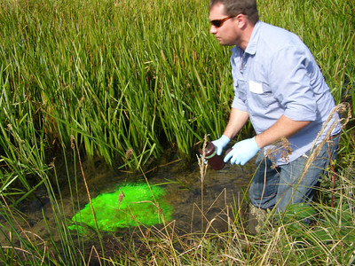 Flowing with the stream, the dye disperses, allowing researchers to track how (and where) nutrients and other chemicals move through the system.
