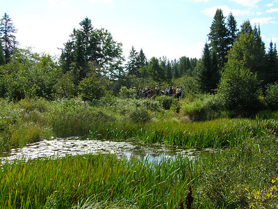On Thursday, Sept. 8th, after a series of presentations in the Trout Lake Station library, the group headed north of Trout Lake to North Creek to hear about hydrology and ecological effects as well as the movement of nutrients through streams and wetlands.