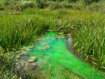 """In slow moving streams like those of Northern Wisconsin's wetlands, nutrients can often stop moving through the ecosystem thanks to """"slack water"""" and biological cycling. While this means that wetland plants and animals don't receive the nutrients coming from upstream, it also slows the loading of nutrients like phosphorous (which can lead to the eutrophication) into lakes connected to these streams and wetlands."""