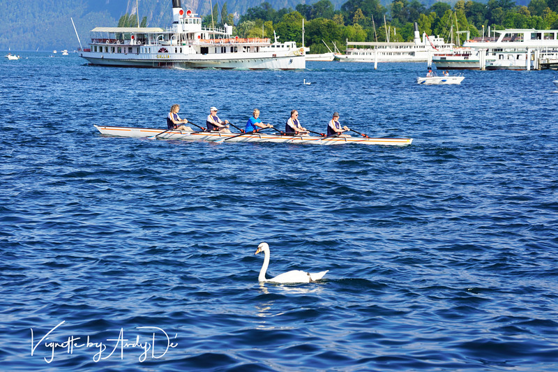 This majestic Swan sharing the waters of Lake Lucerne with the row boat and the Cruise Boats, presented an awesome photo-op that I could not miss!