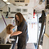 Joed Viera/Staff Photographer-Jen Seabert grooms a dog in her mobile pet spa.