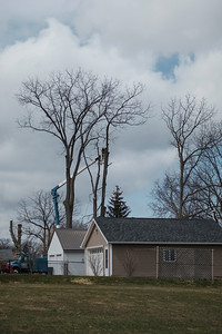 JOED VIERA/STAFF PHOTOGRAPHER-Cutting Edge workers saw off loose branches from the trunk of a tree behind a High Street home Thursday afternoon.