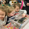 JOED VIERA/STAFF PHOTOGRAPHER-  Lucy Gaskill, 5, Rileigh Rankie, 4, and Grace Gaskill, 4 pet a crab, blue lobster and other sea creatures in the touch tanks the Niagara Aquarium brought to the Lockport Public Library during their event on Thursday.