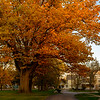 Joed Viera/Staff Photographer-Golden foliage fill the branches of a tree in front of Lockport Presbyterian Home.