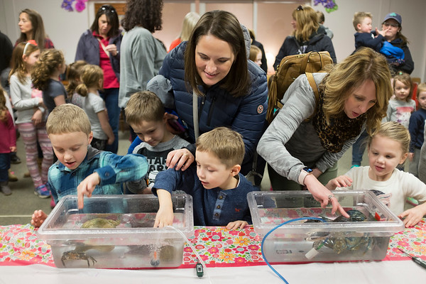 JOED VIERA/STAFF PHOTOGRAPHER- Children learned about and interacted with a crab, a blue lobster and other sea creatures when the Aquarium of Niagara brought its Touch Tank to Lockport Public Library on Thursday.