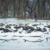 Joed Viera/Staff Photographer-A man takes a stroll along an icy Erie Canal Monday afternoon.