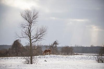 Joed Viera/Staff Photographer- A horse grazes on a pasture on Lewiston Road by the Niagara County border near Alabama NY.