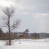 Joed Viera/Staff Photographer- A horse grazes on a pasture on Lewiston Road by the Niagara County border near Alabama NY.