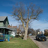 Joed Viera/Staff Photographer- <br /> A tree on Church Street has some residents concerned.
