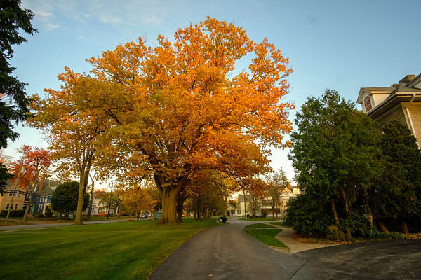 Joed Viera/Staff Photographer-Foliage fills the branches of a tree in front of Lockport Presbyterian Home earlier this fall.
