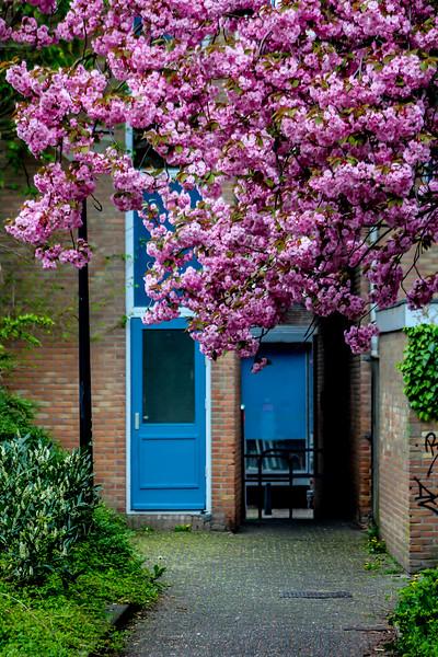 Garden of the blue door.