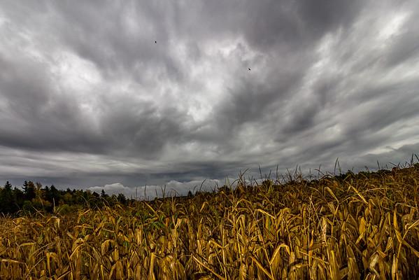 Kirkville Fall Harvest