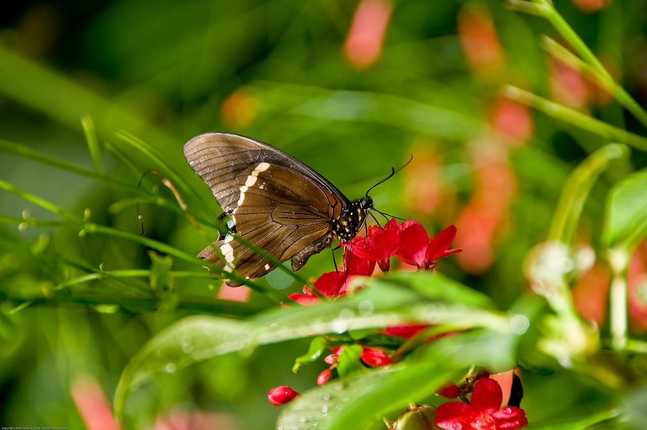 Butterfly-50