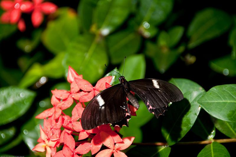 Butterfly-27