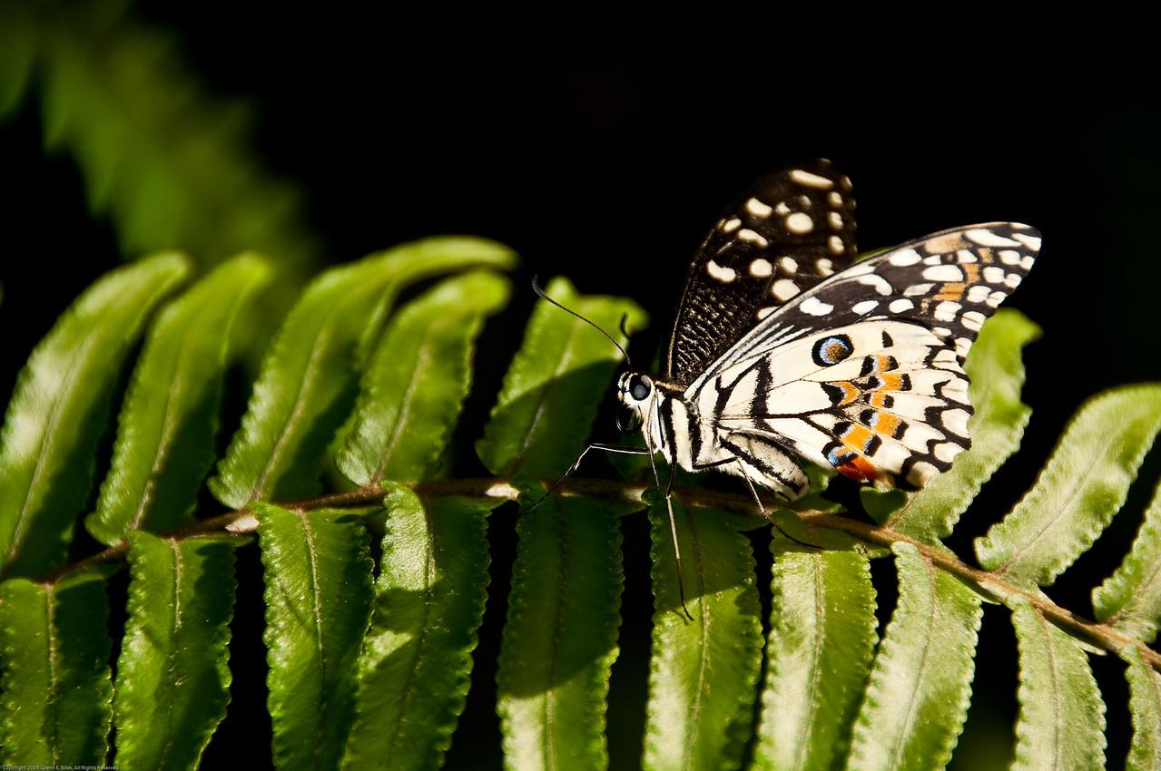 Butterfly-45
