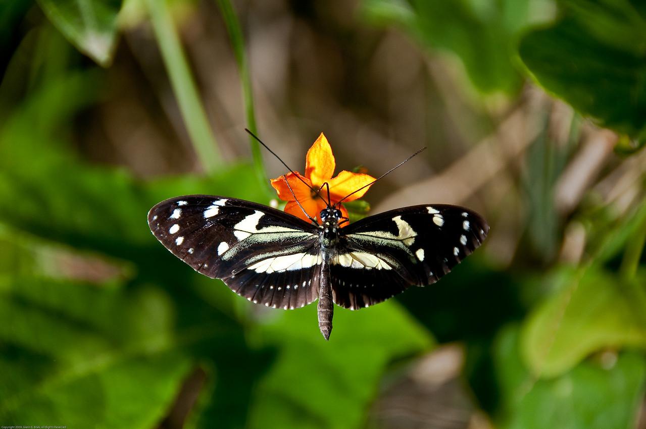 Butterfly-35