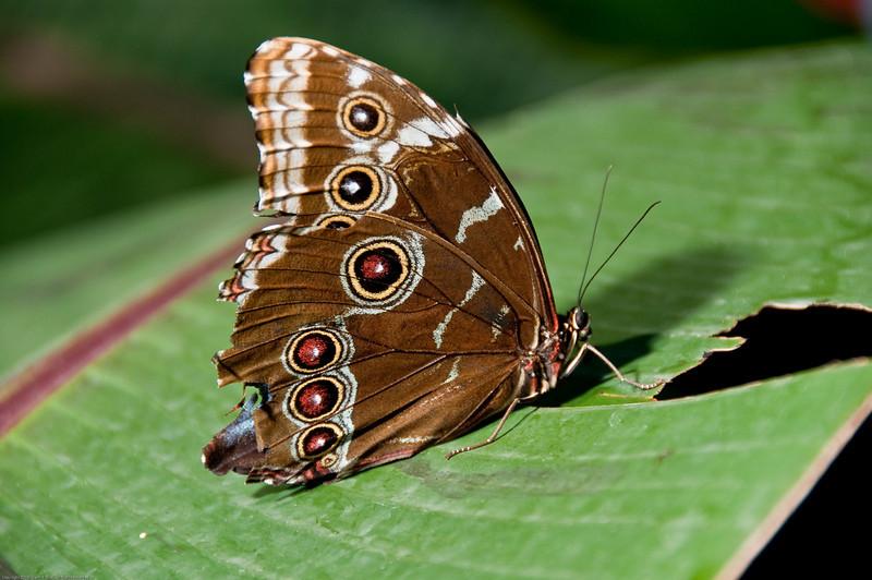Butterfly-37