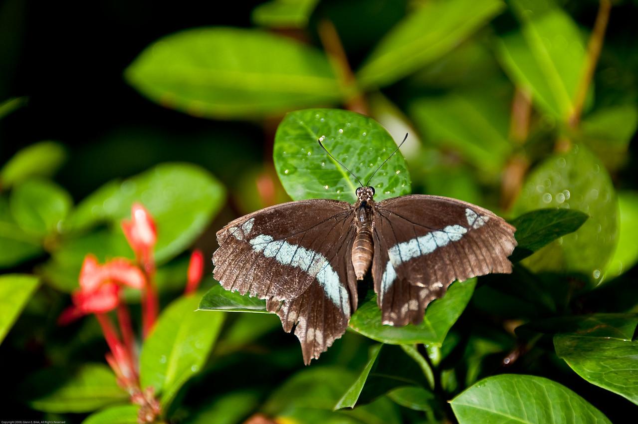 Butterfly-28