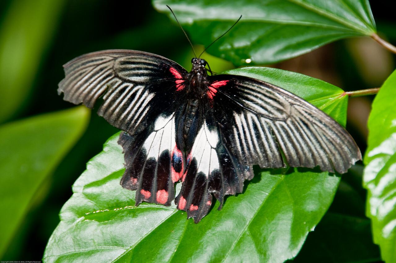 Butterfly-4