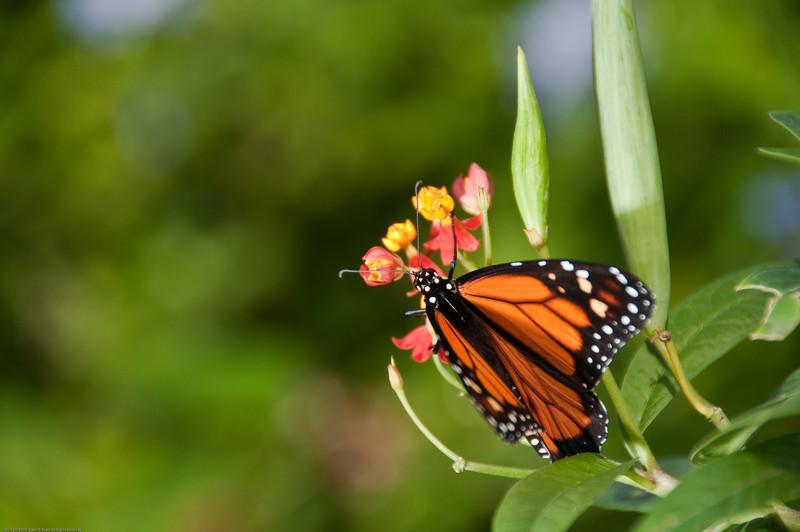 Butterfly-23