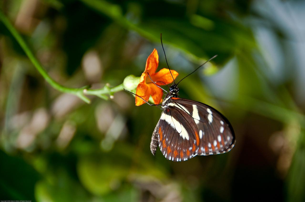 Butterfly-36