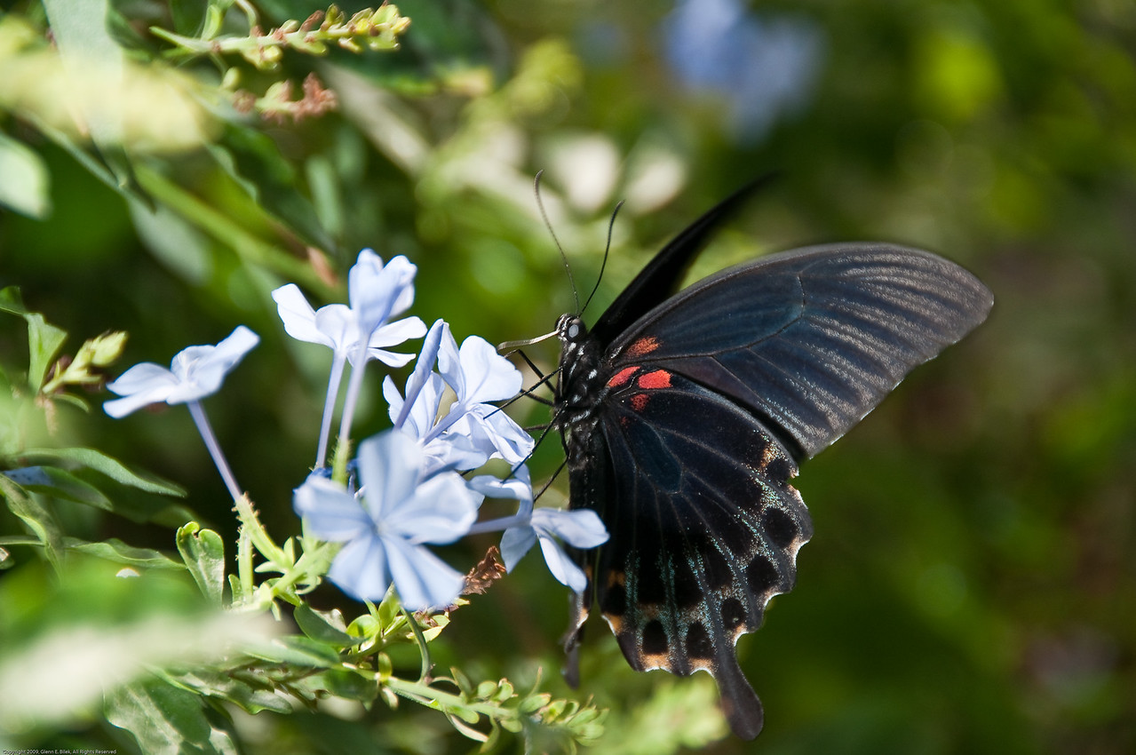 Butterfly-22
