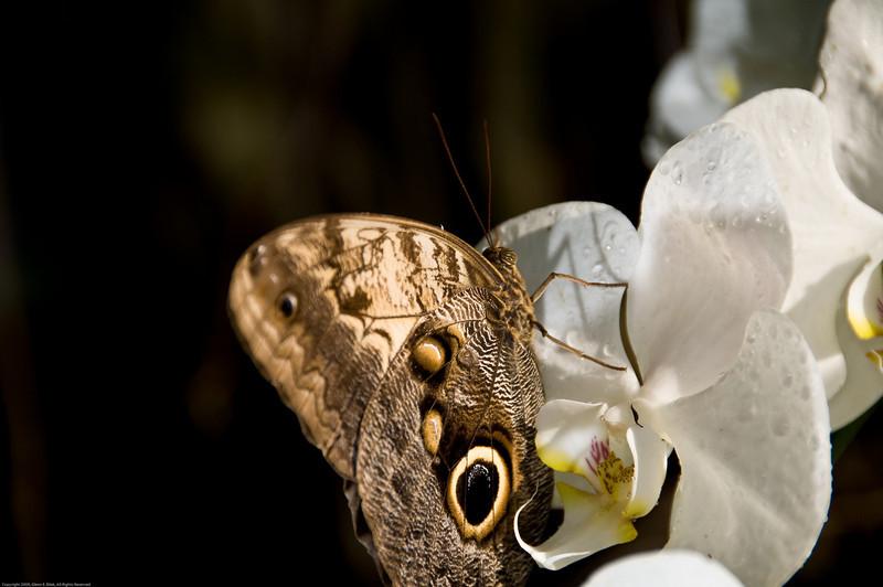 Butterfly-26