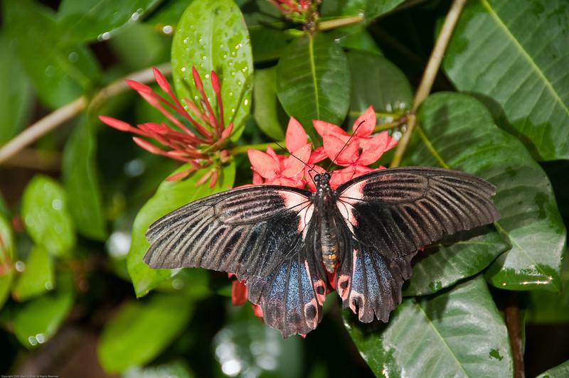 Butterfly-24