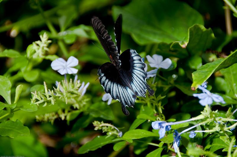 Butterfly-32