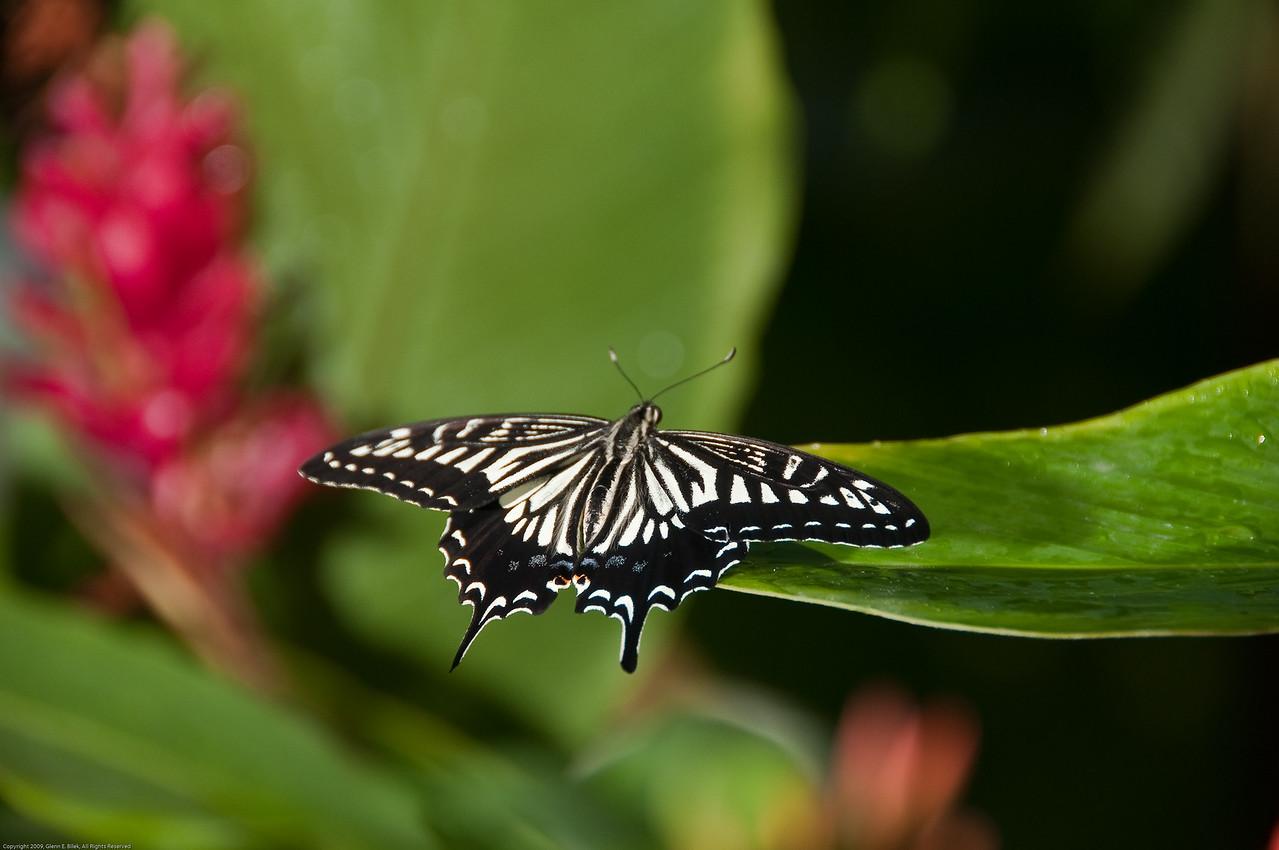 Butterfly-25