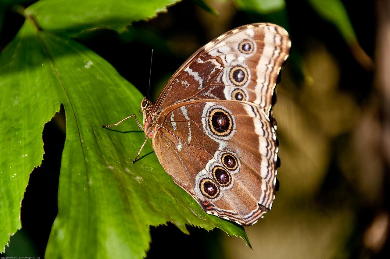 Butterfly-16