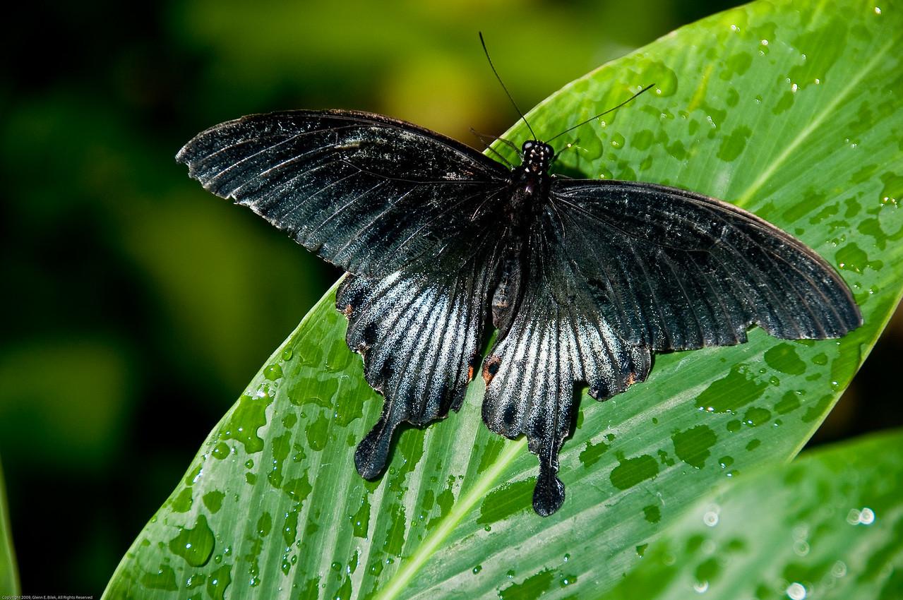 Butterfly-11