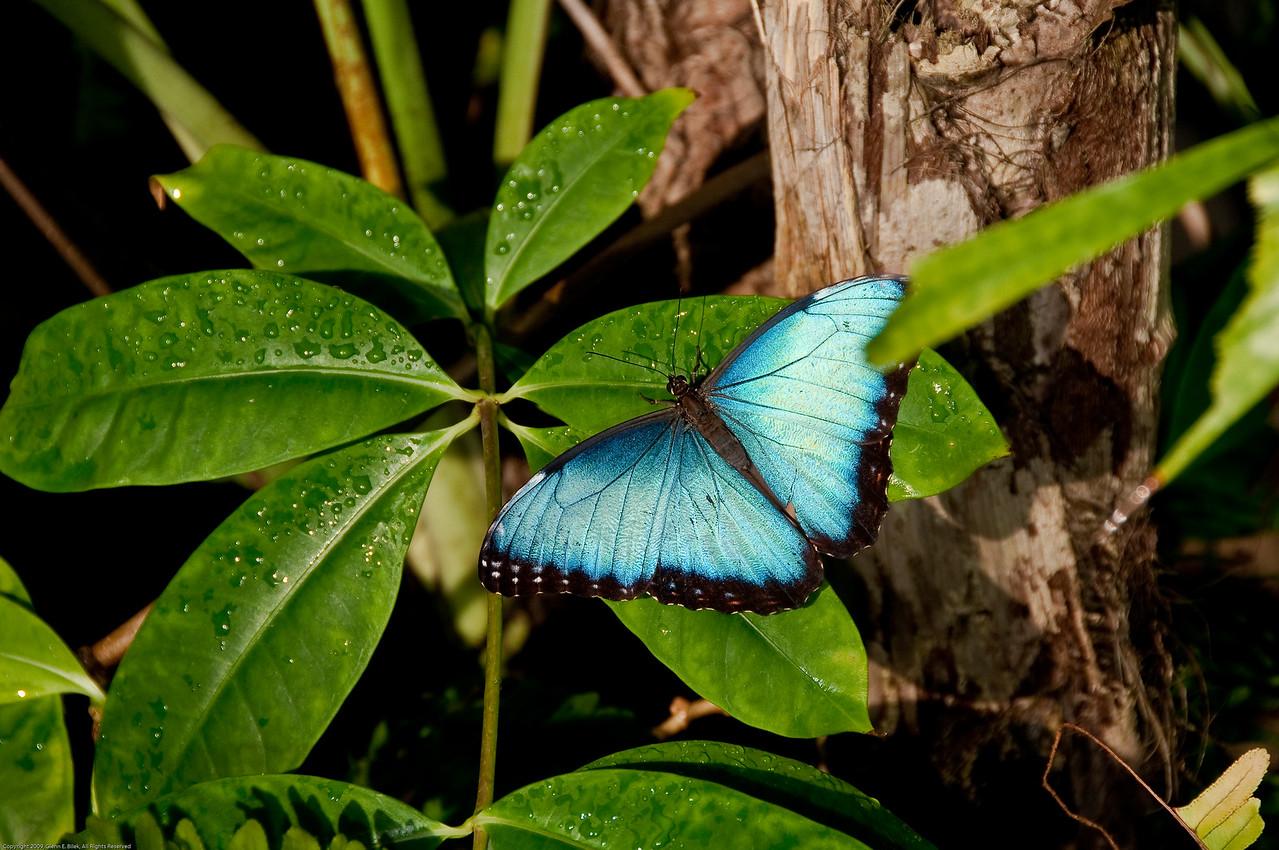 Butterfly-15