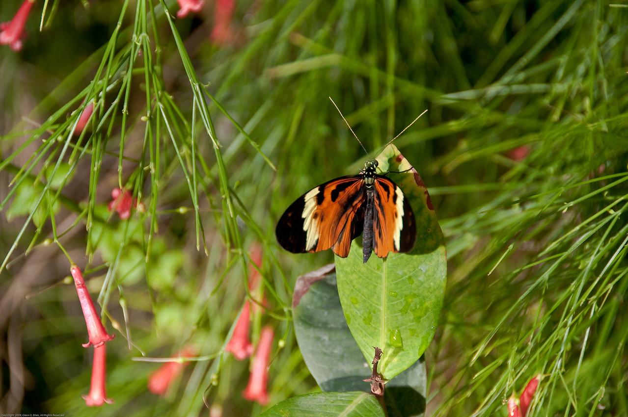 Butterfly-34
