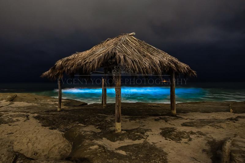 Bioluminescent Windansea